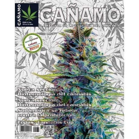 Revista Cáñamo 181